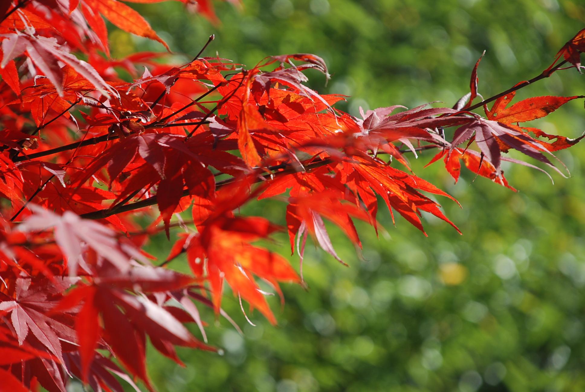 秋 写真5