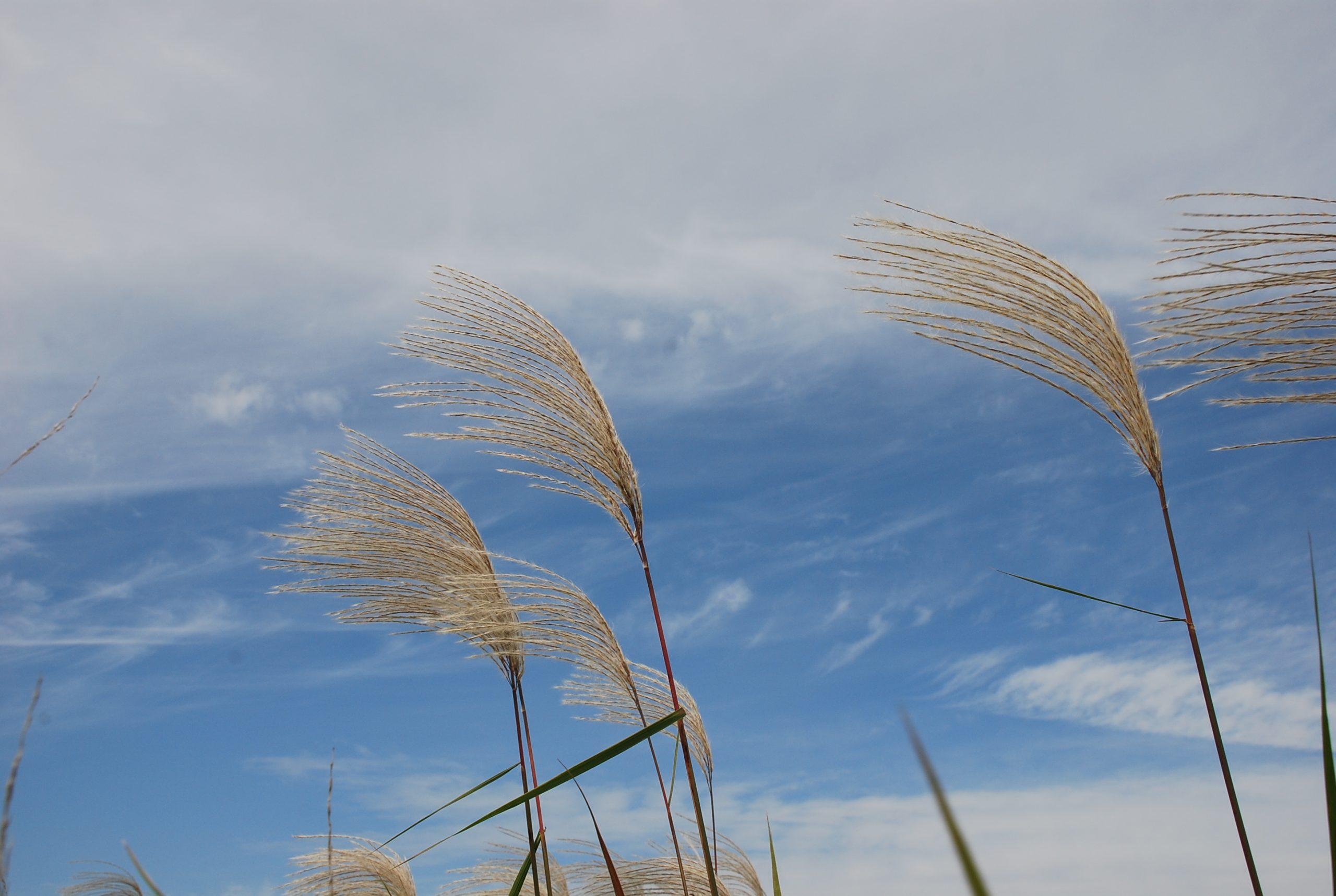 秋 写真7