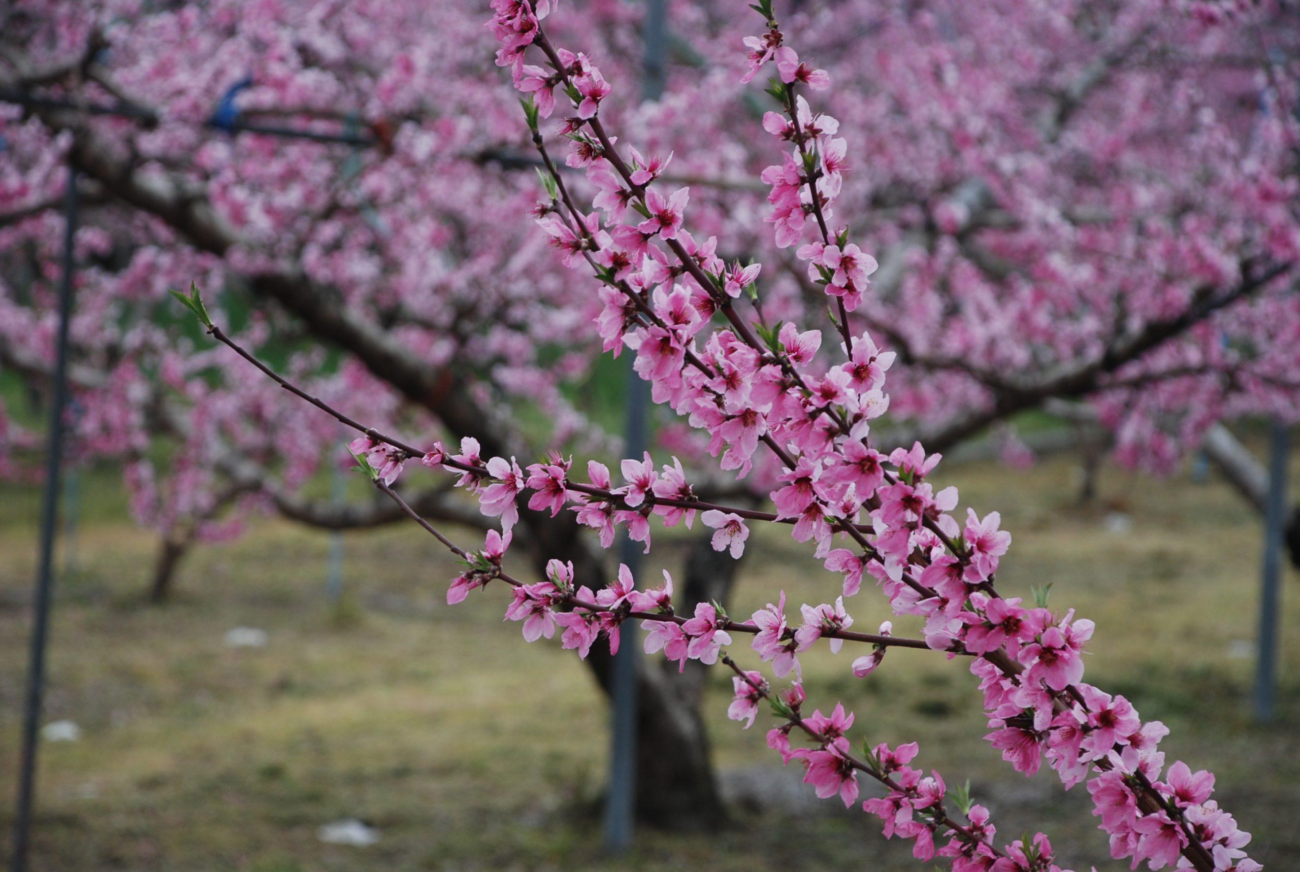 春 写真4