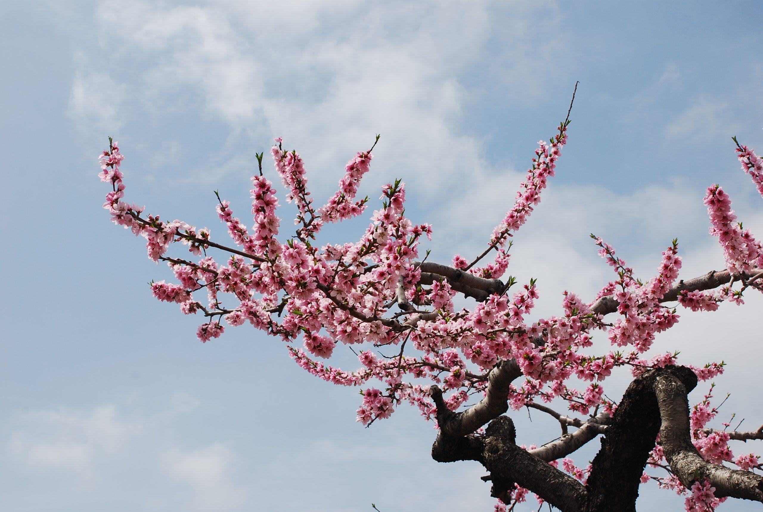 春 写真5
