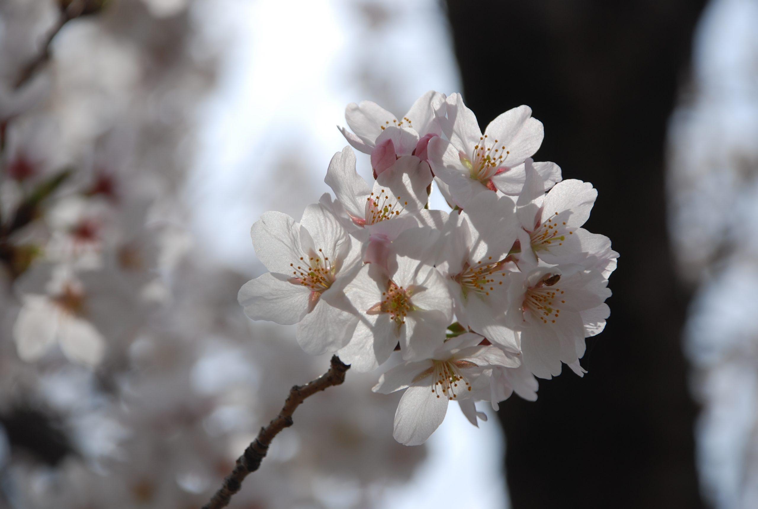 春 写真6