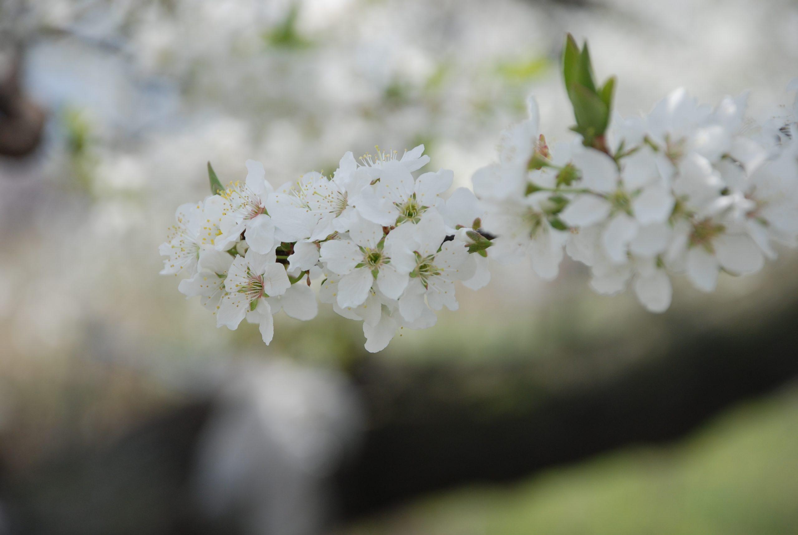 春 写真7