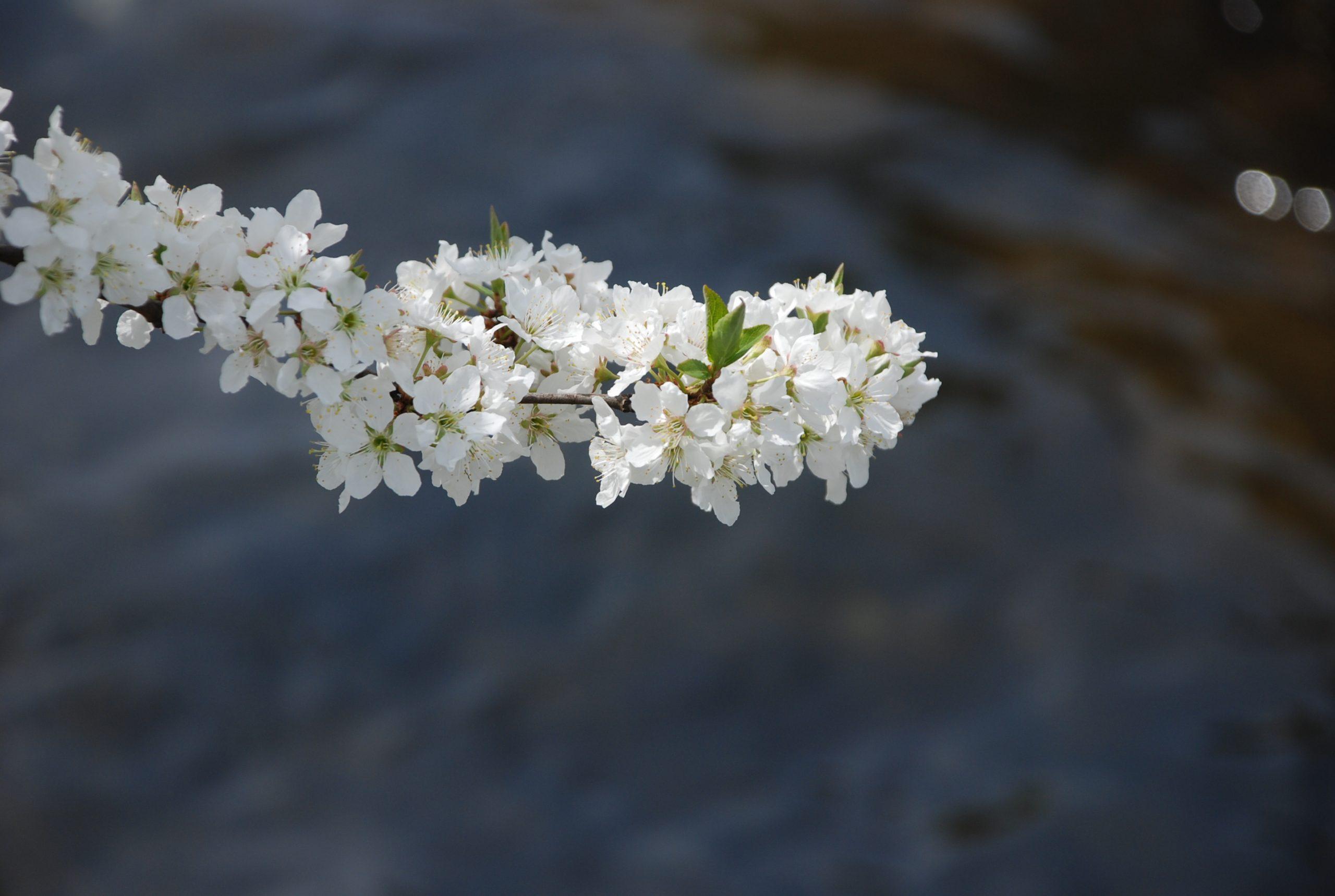 春 写真8