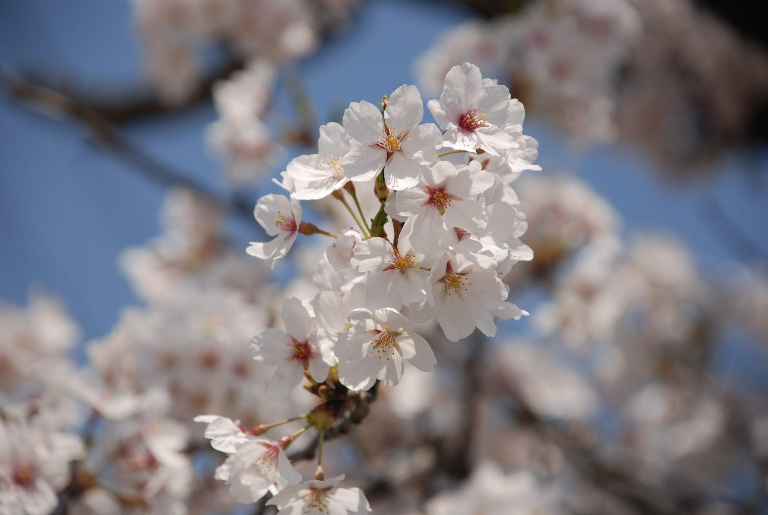 春 写真9