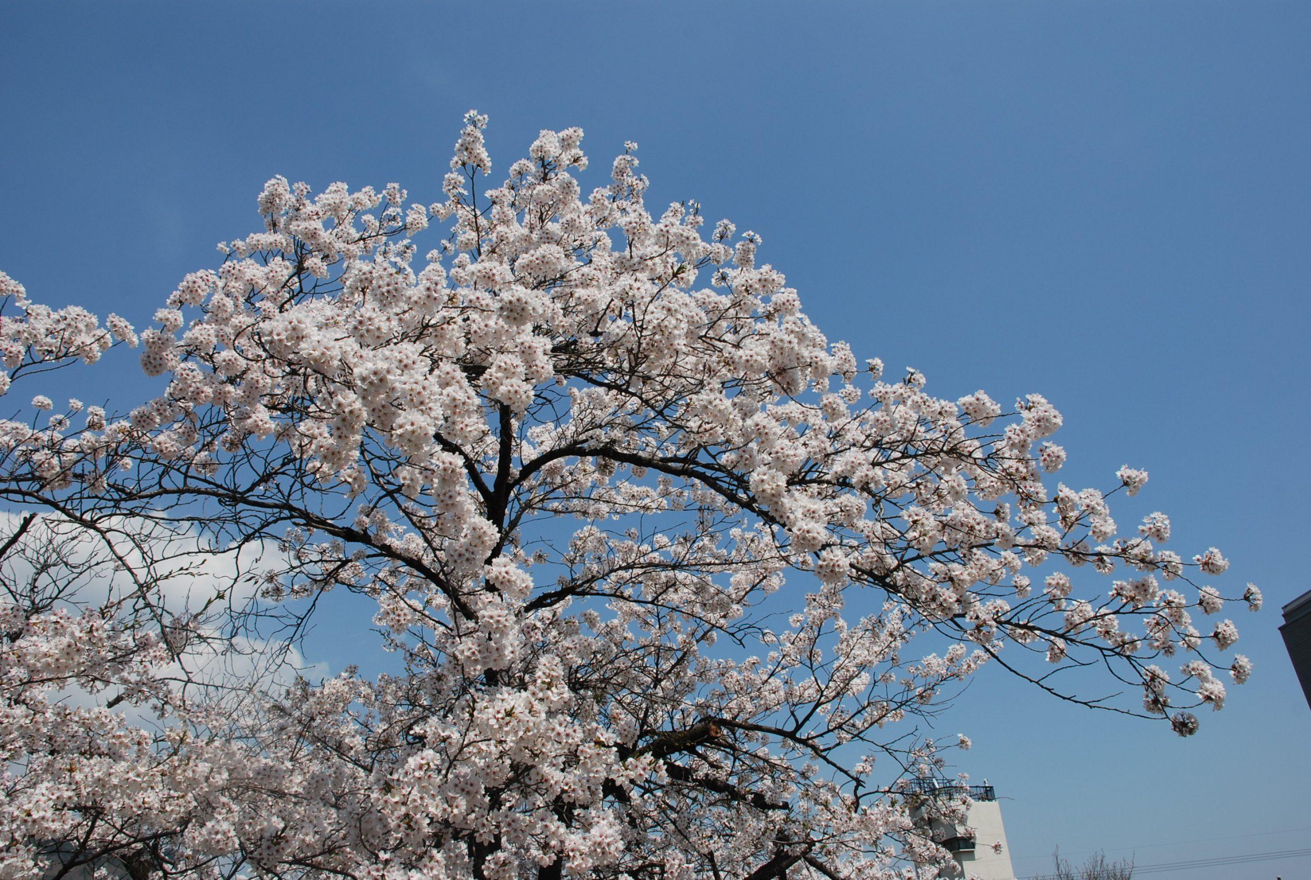 春 写真10